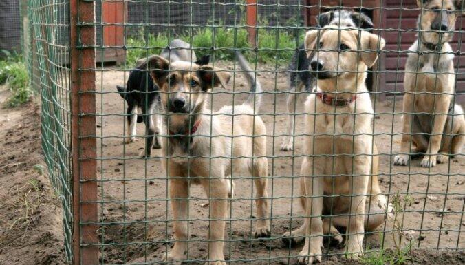 Izšķērdēta nauda un pašvaldības nolaidība – dzīvnieku patversmē 'Ulubele' atklāj virkni pārkāpumu