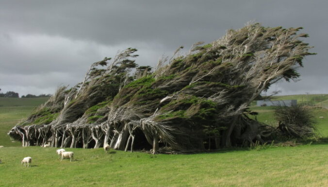 Iespaidīgākie koki no visas pasaules