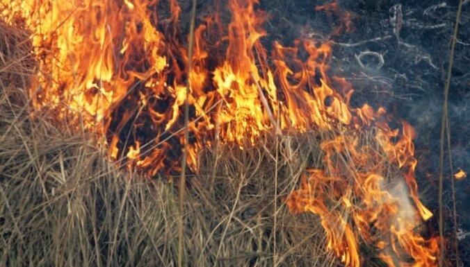 ФОТО: 39 пожарных тушили прошлогоднюю траву в районе улицы Клейсту