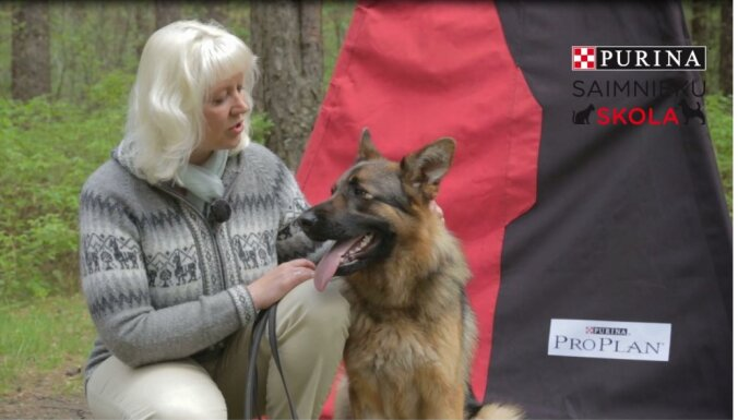 Video: Kā panākt, lai suns tevi klausa