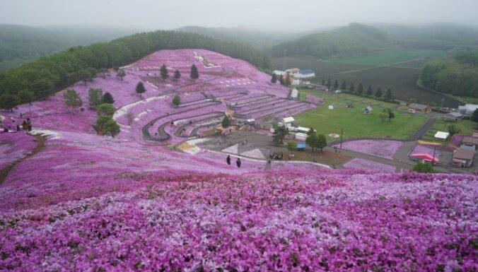 Gluži kā pasaku zeme: vareni ziedošs parks Japānā