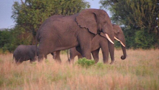 Latviešu motobraucēji Ugandā: Āfrikas ledāji, ziloņi un neērtības, bet Eiropas cenas un projekti