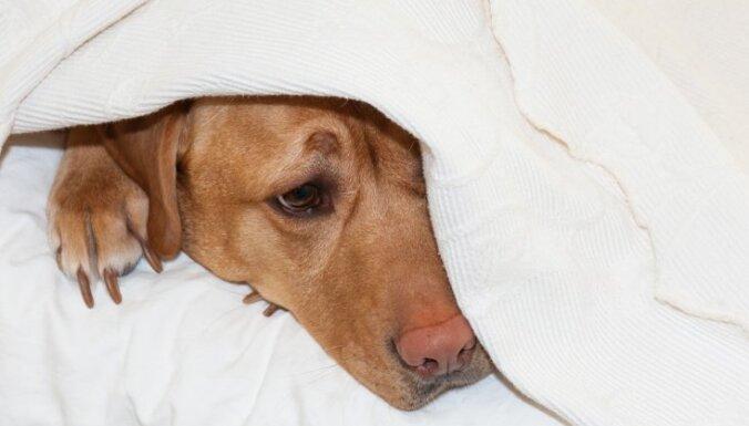 Может ли у собак болеть голова?