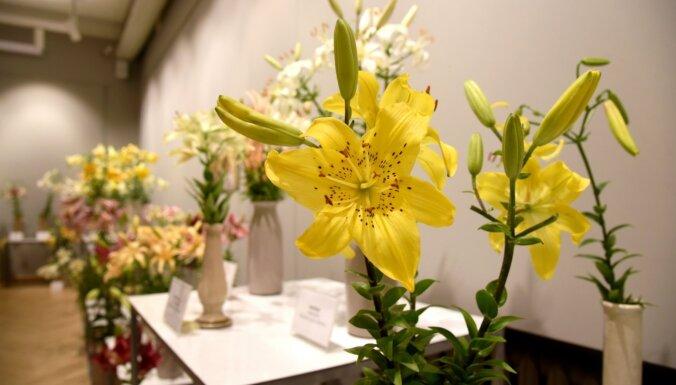 Foto: Skaistākās šķirnes vienkopus – Dabas muzejā atklāta liliju izstāde