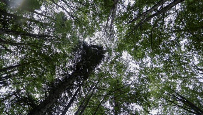 LA: meklē pircēju lielākajam meža īpašumam Latvijā