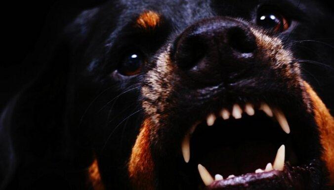 Latvijas Pasts готова прервать доставку почты в дома с агрессивными собаками