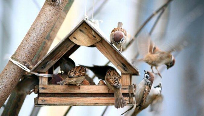 Ieguvumi putnu piebarošanai dārzā