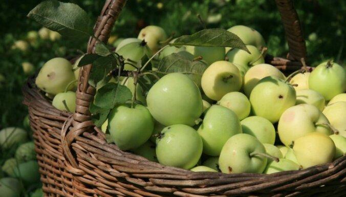 Эксперты: урожай яблок и груш в этом году может быть меньше