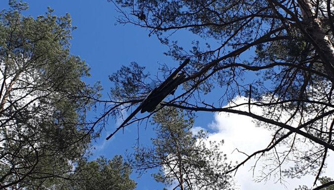 """ФОТО. Найден """"сбежавший"""" дрон: он застрял на дереве в Гаркалнском крае"""