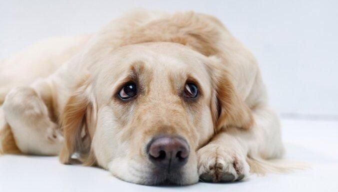 Прощай, друг: советы ветеринара каждому, кто решается на усыпление собаки