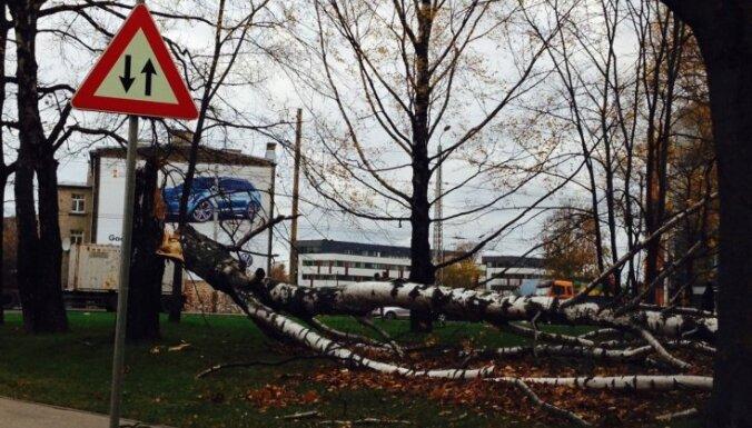 В Латгалию пришла буря: один человек погиб