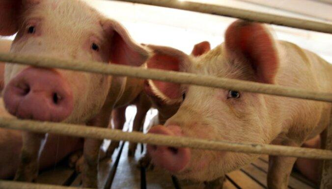Поджог хлева в Кулдигском крае: погибли 4 коровы и 19 свиней