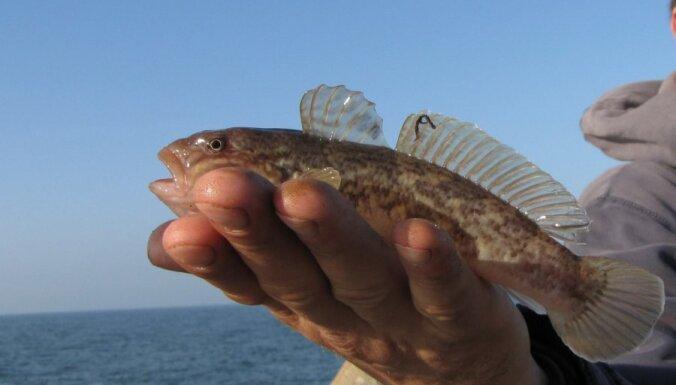 Европейским рыбакам запретят выбрасывать дохлую рыбу в море