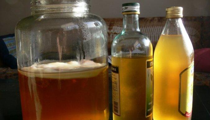 Mistiskā tējas sēne. Kas tajā veselīgs un kā to audzē?
