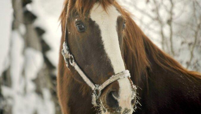 Этой зимой по Старой Риге вновь можно будет ездить на конных упряжках