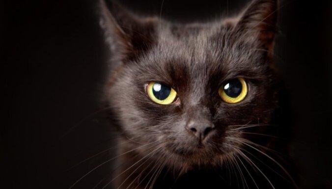 Не такие уж и несчастливые. Семь неожиданных фактов о черных котах (и кошках)