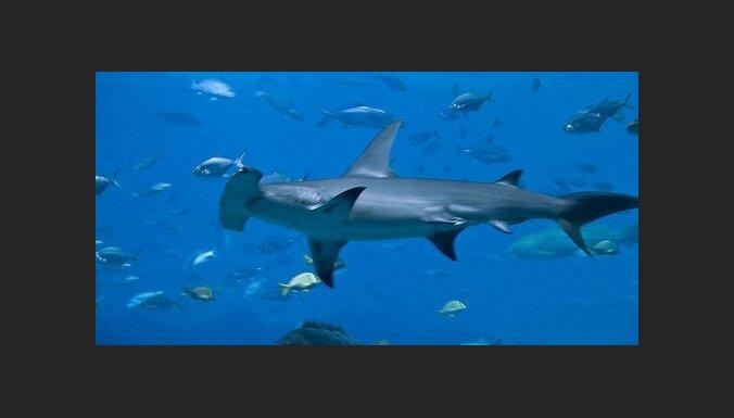 На Багамах полностью запрещен отлов акул