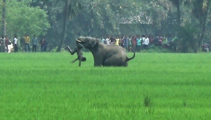 Savvaļas ziloņi Indijā nogalinājuši piecus cilvēkus