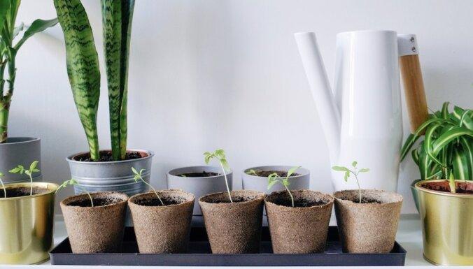 ФОТО. Как организовать огород на подоконнике: советы трех латвийских Instagram-блогеров