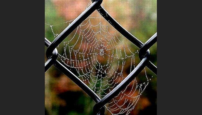 zirneklis,tikls,noziegums,strukturas,sods