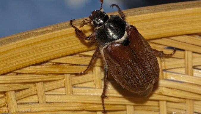 ANO: Kukaiņi ir nākotnes pārtika