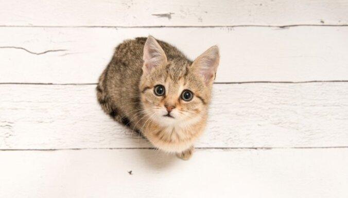 В Китае впервые создали клон котенка для продажи