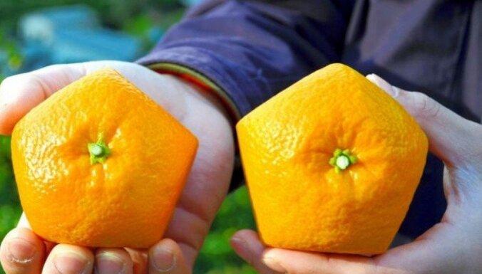 Japāņi izaudzējuši dīvainu piecstūru apelsīnu