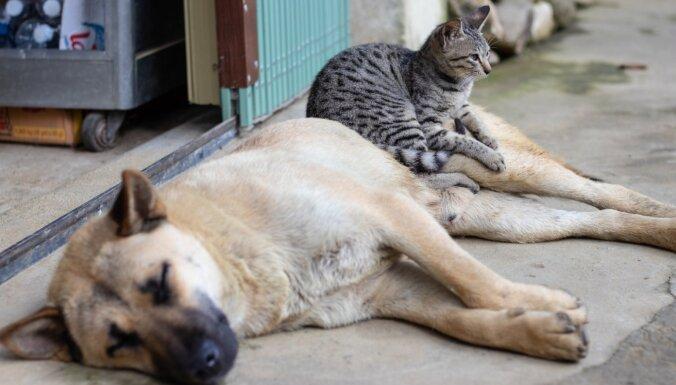 Великобритания эвакуирует из Афганистана 200 собак и кошек. Для этого заказали отдельный самолет