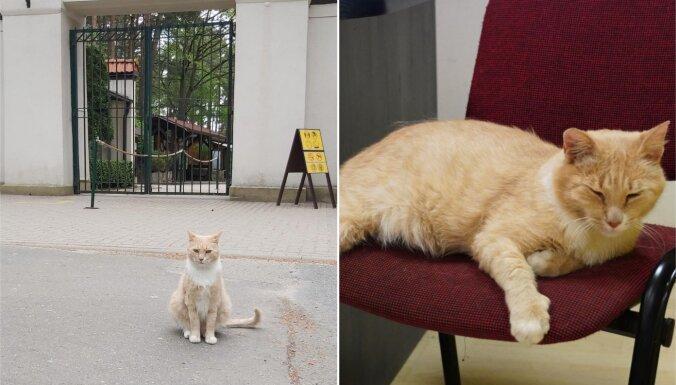 Pazudis Rīgas zoo galvenais vārtu sargs – rudais runcis Rūdis
