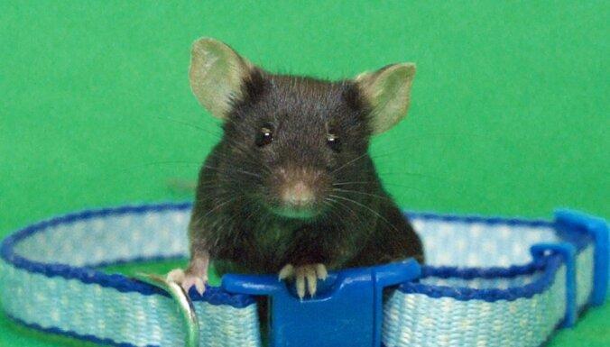 Peles dēļ Spānijā uz sešām stundām aiztur avioreisu