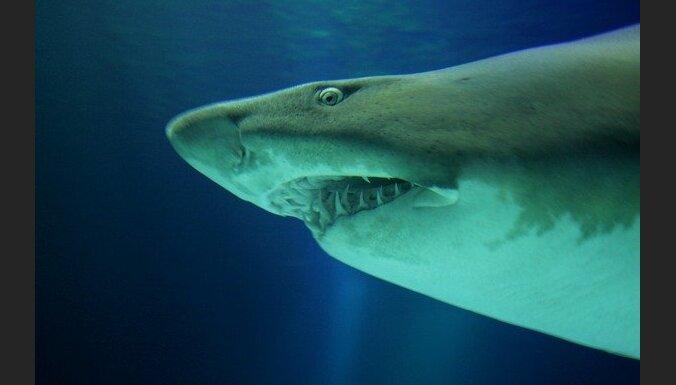 Austrālijā nirējam uzbrukušas divas haizivis