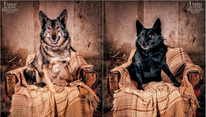 Unikālā fotoprojektā meklē mājas patversmes 'Ķepu ķepā' sunīšiem