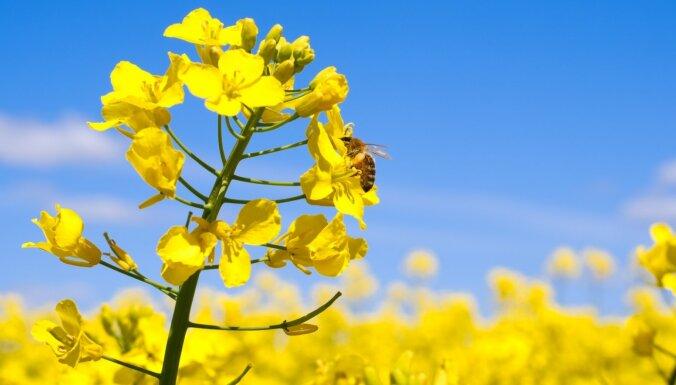 Sākotnējie dati, Latvijā par 14% sarucis reģistrēto bišu saimju skaits