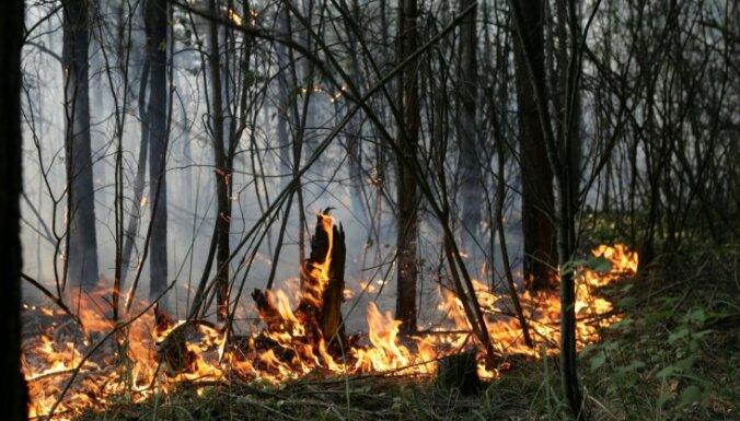 Krustpils novadā uguns plosījusies meža jaunaudzē; dedzis arī mežs Limbažu novadā