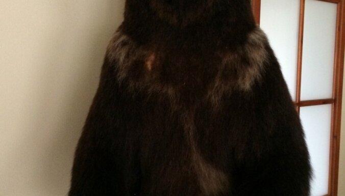 Rīgā un Engurē konfiscē nelegālas lāčādas un vienu izbāztu lāci