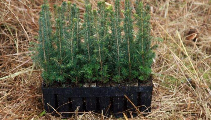 Rīgas meži в этом году посадили почти миллион новых деревьев