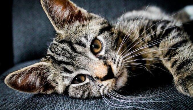 Кошачье здоровье: о чем должен знать каждый хозяин