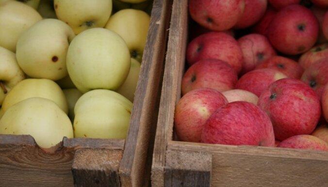 Школьникам начнут выдавать бесплатные фрукты