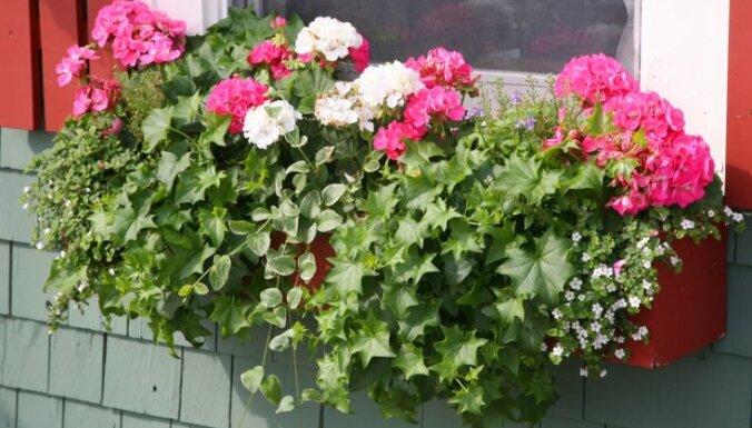 Какие цветы посадить на балконе? Выбираем растения для разных сторон света
