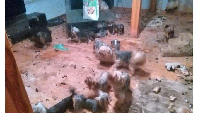 Нелегальный питомник в Марупе: собак из приюта передадут в СГД