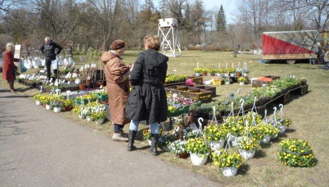 За саженцами! Базарчики, которые каждый садовод должен посетить этой весной