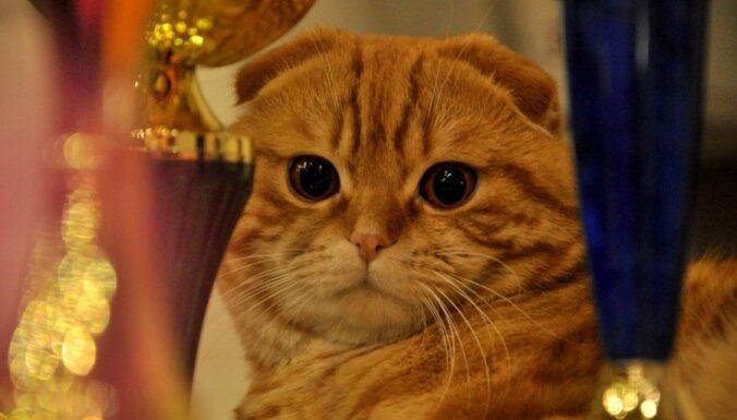 Заводчикам кошек и собак потребуется пройти специальные курсы