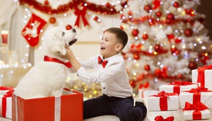 Vācijā Ziemassvētku laikā vairākās patversmēs tiks aizliegts adoptēt dzīvniekus