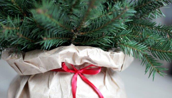 Arī brīvdienās un svētku dienās ārtelpās varēs tirgot Ziemassvētku eglītes