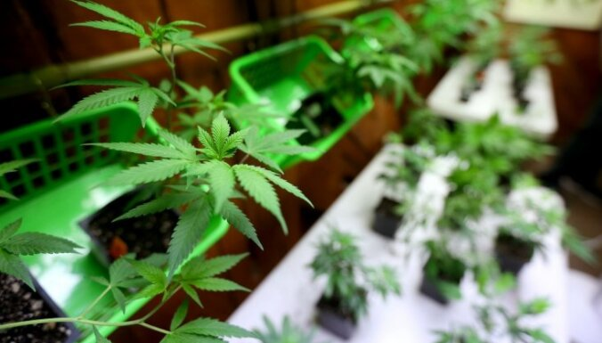 Полицейские обнаружили в заброшенной постройке плантацию марихуаны