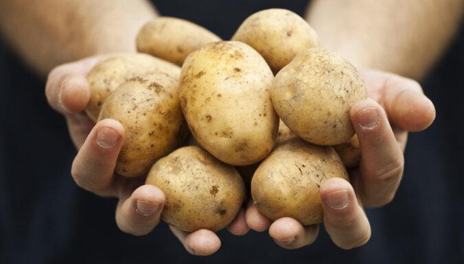 Mīti un patiesība par latviešu 'otro maizi' - kartupeli