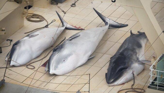Japāna paziņojusi, ka atsāks vaļu komerciālās medības