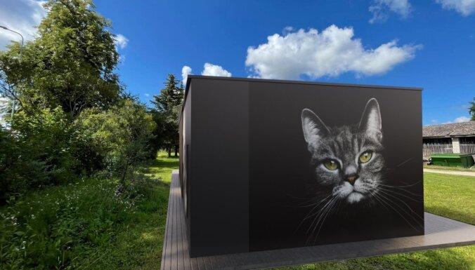 На территории Сельскохозяйственного университета появится приют для бездомных кошек
