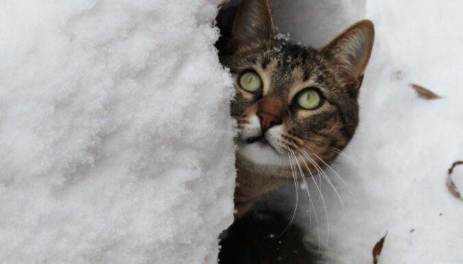 Brīdina par stipru sniegu Latvijas ziemeļu daļā
