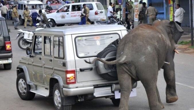 В Индии слоны устроили погром: есть жертвы